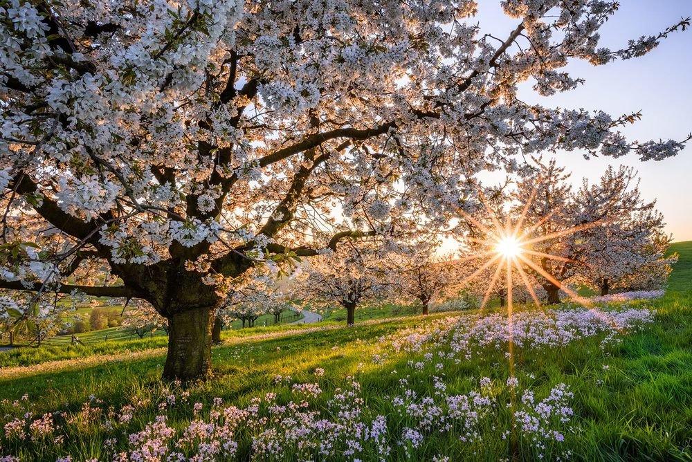 картинки деревья весной в саду всегда учитывайте