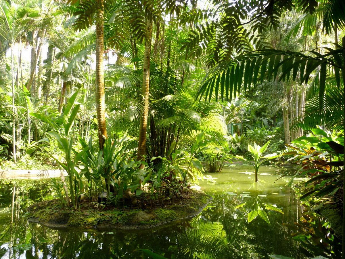Картинки природа джунгли стенки горки