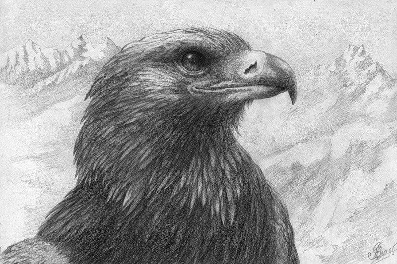 рисунки орлов карандашом получил спорный