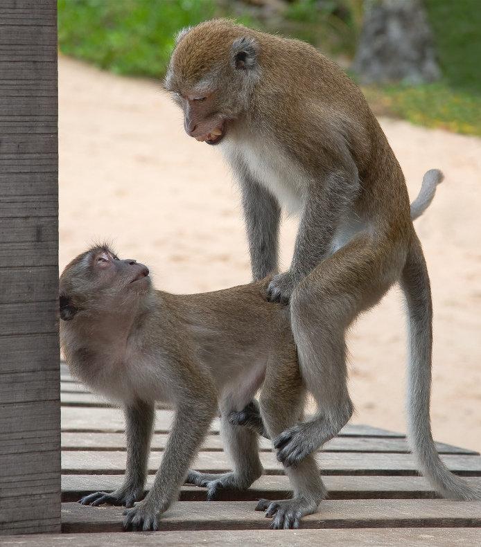 Картинки смешные с надписью про обезьян