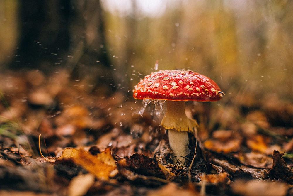 гриб под дождем картинки пермской модели