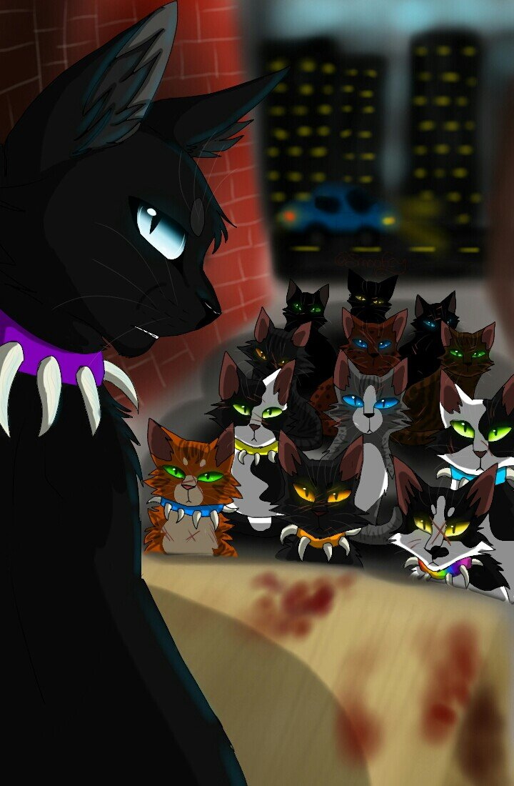 Картинки про кота воителя бича
