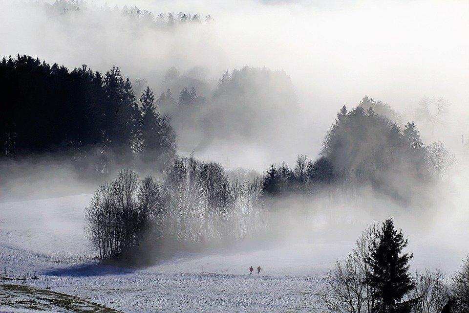 Фон туманный лес таких