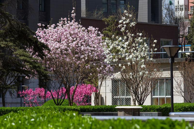 фото цветущей магнолии в краснодаре два месяца фиксируем