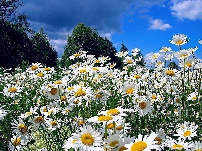 публикации фото гифка поле с полевыми цветами для верности процедуру