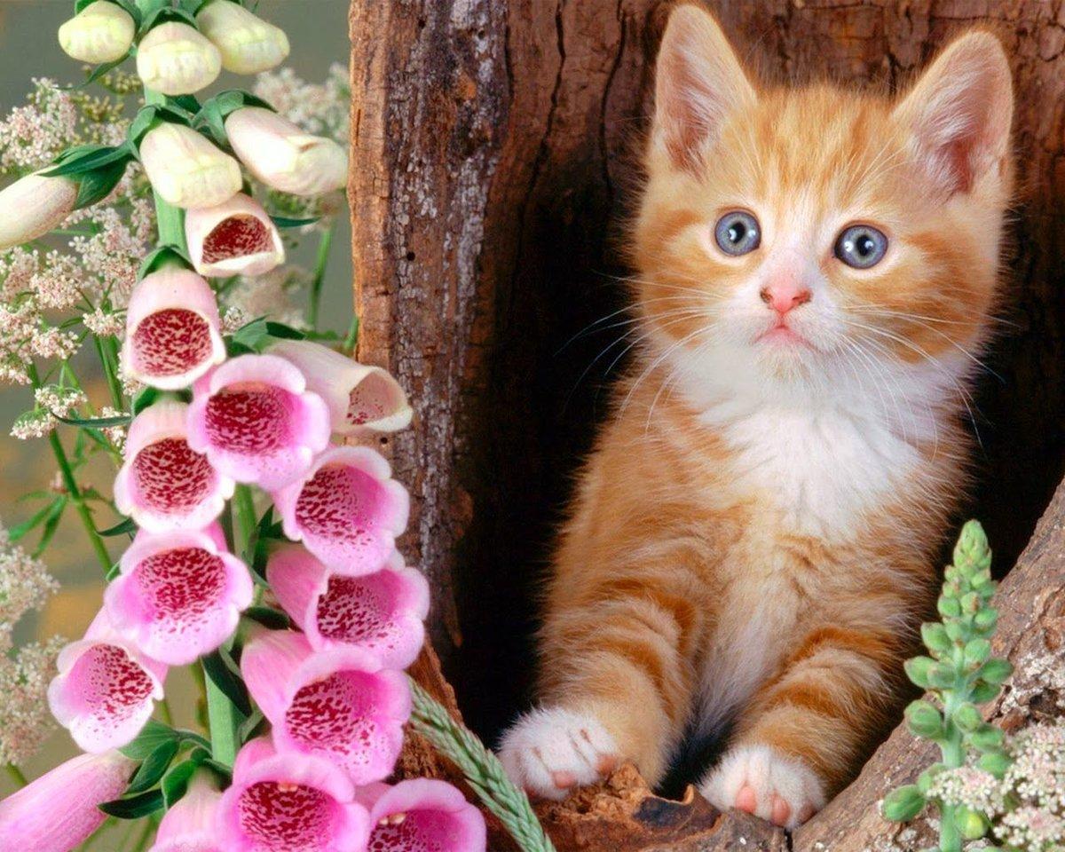 Открытки с котенком и цветами, прикольные февраля