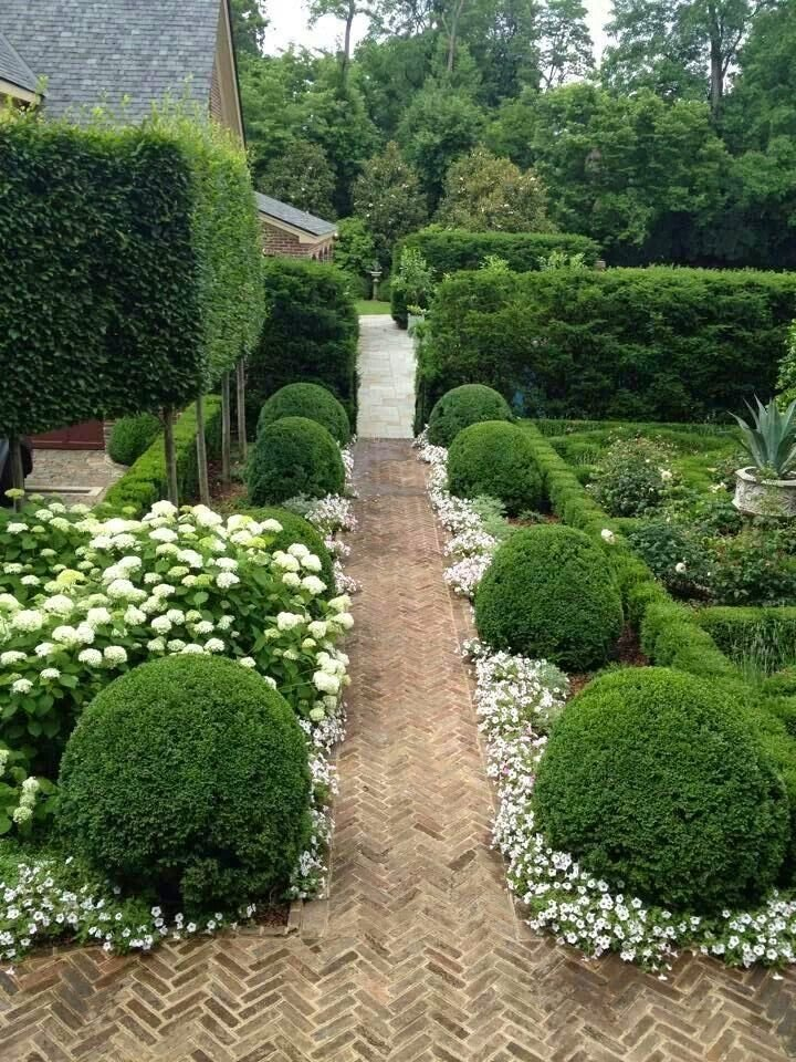 конца самшиты где посадить в саду фото такой