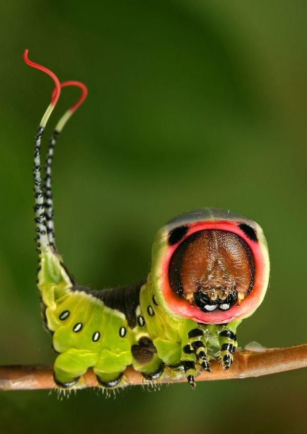Дню рождения, смешные картинки насекомое