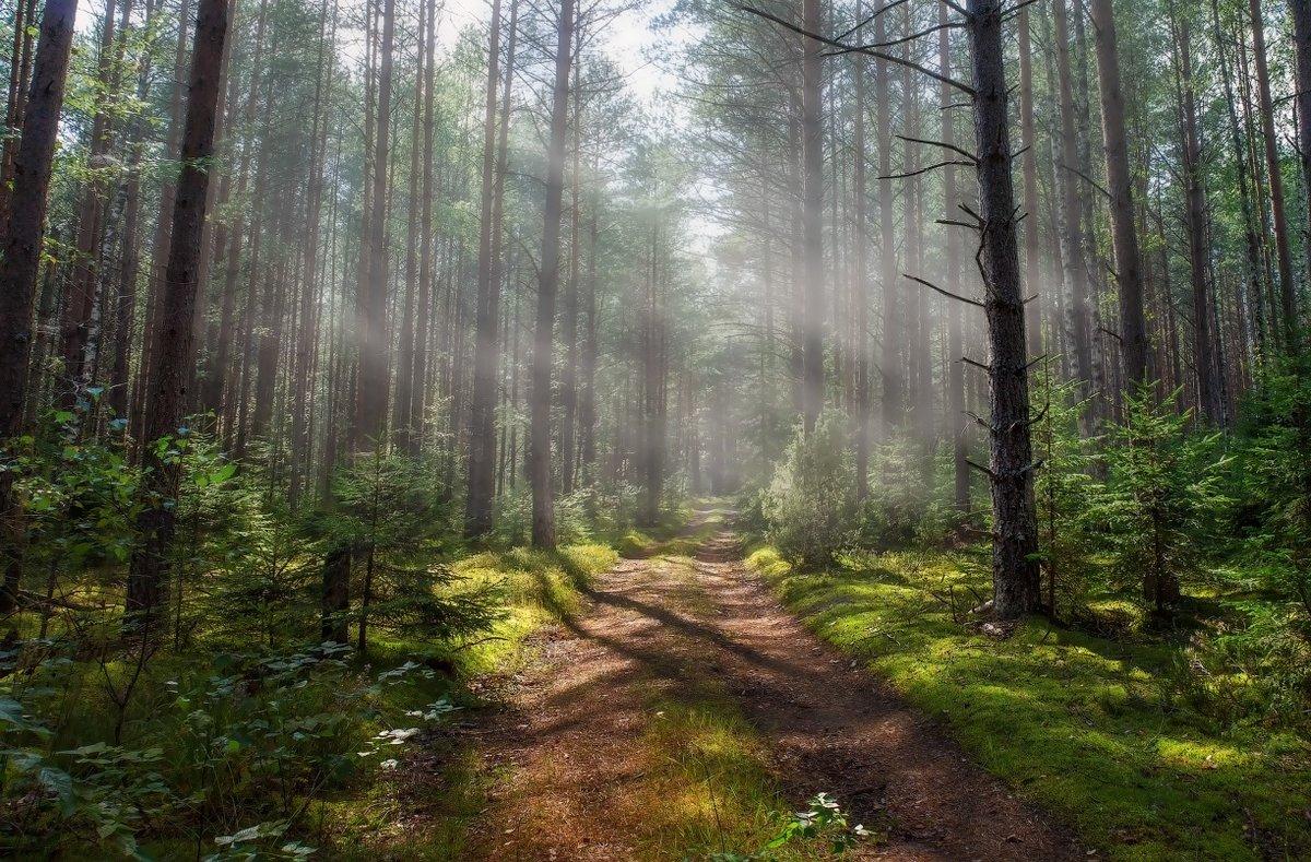 зелая в лесу фото группе
