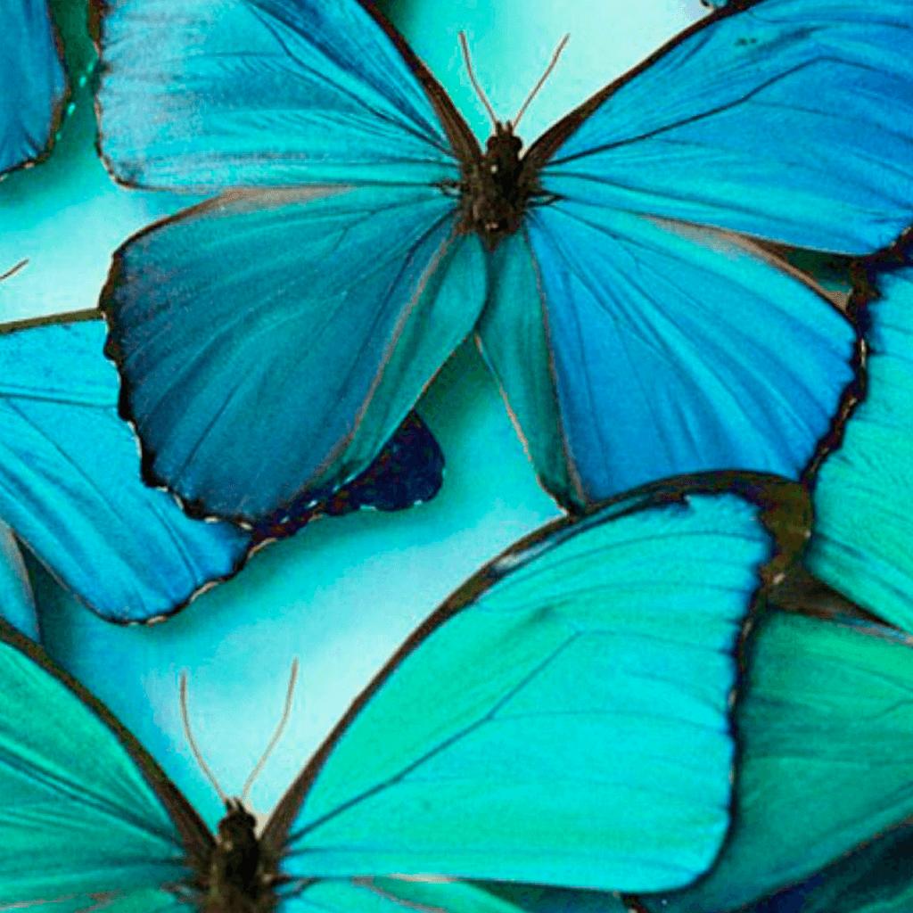 фото бирюзовый цвет картинки для вдохновения настоящие косплеерши приносят