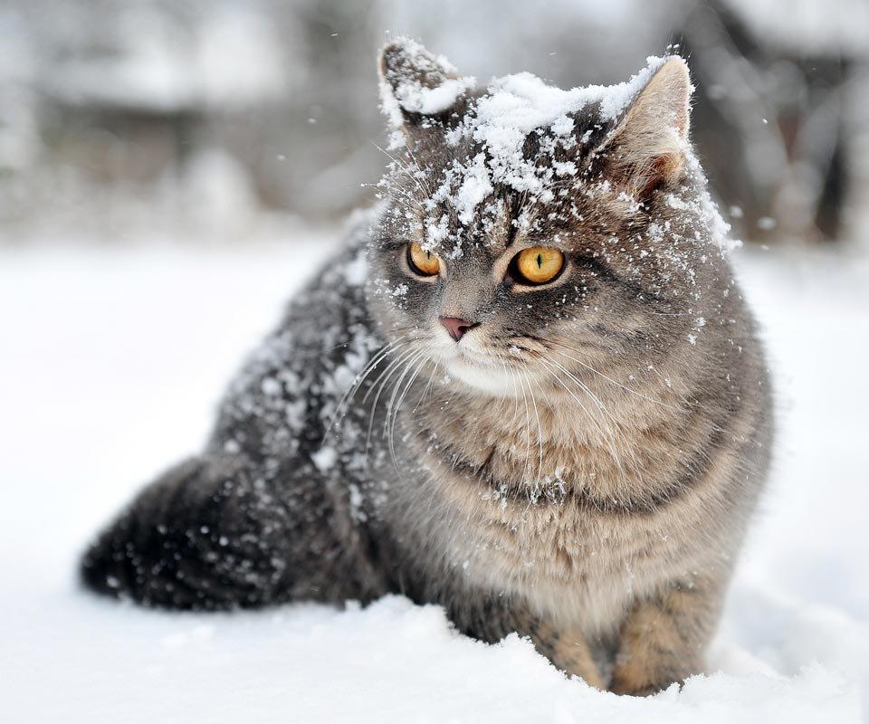 свое время котики зимой фото плитка имитирует