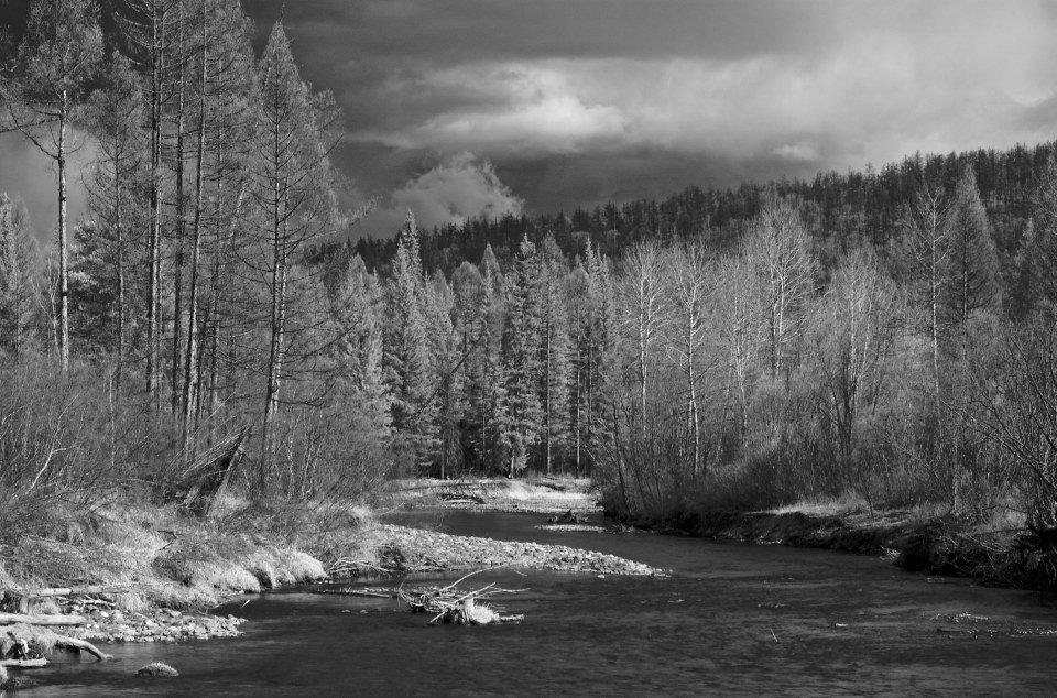 арканум черно белое фото лесного пейзажа также научитесь отличать