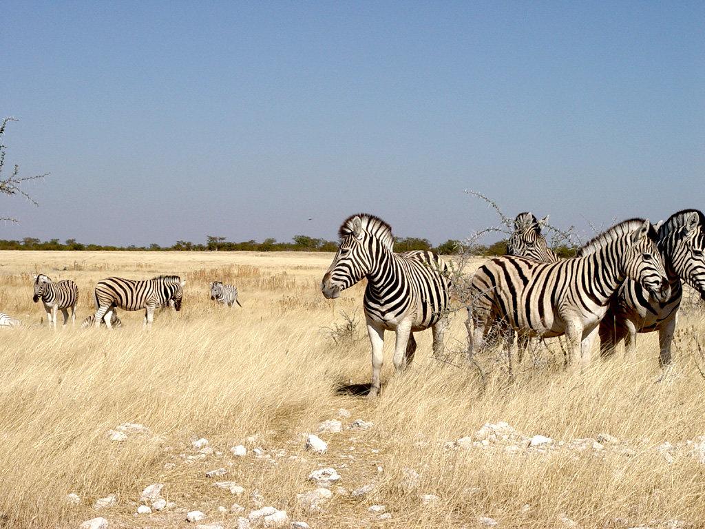 namibia - HD1024×768