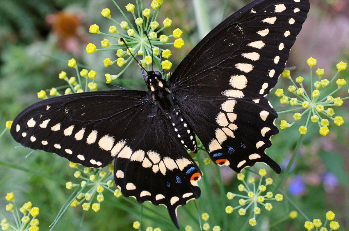Бабочки открытки фото