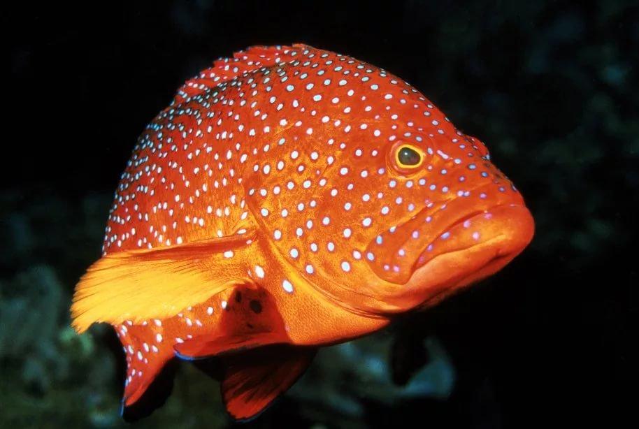 Рыбка картинки красивые, днем рождения георгий