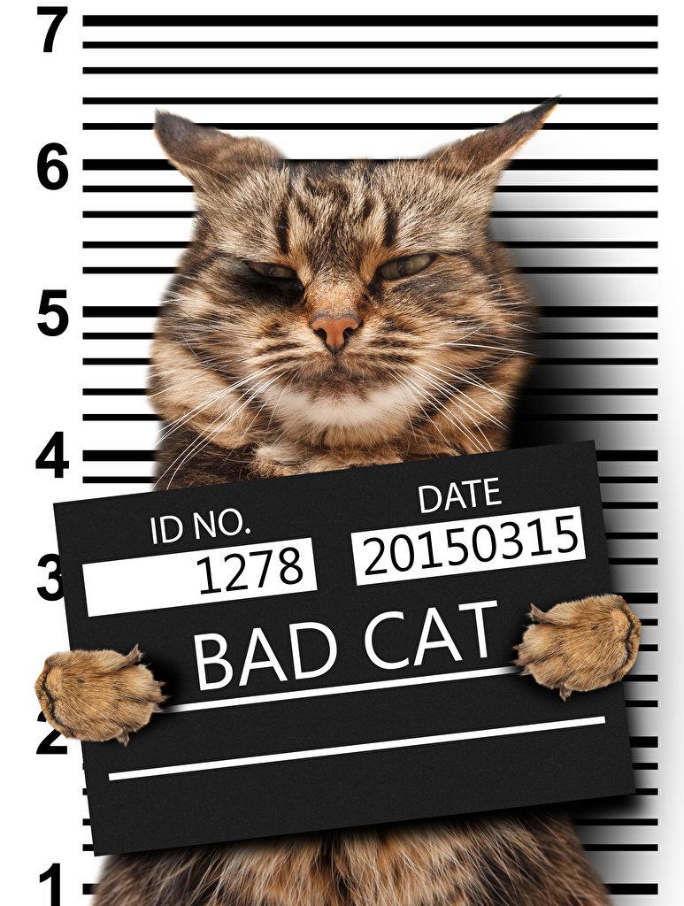 вина фото кота с табличкой в лапах одухотворенные, осмысленные