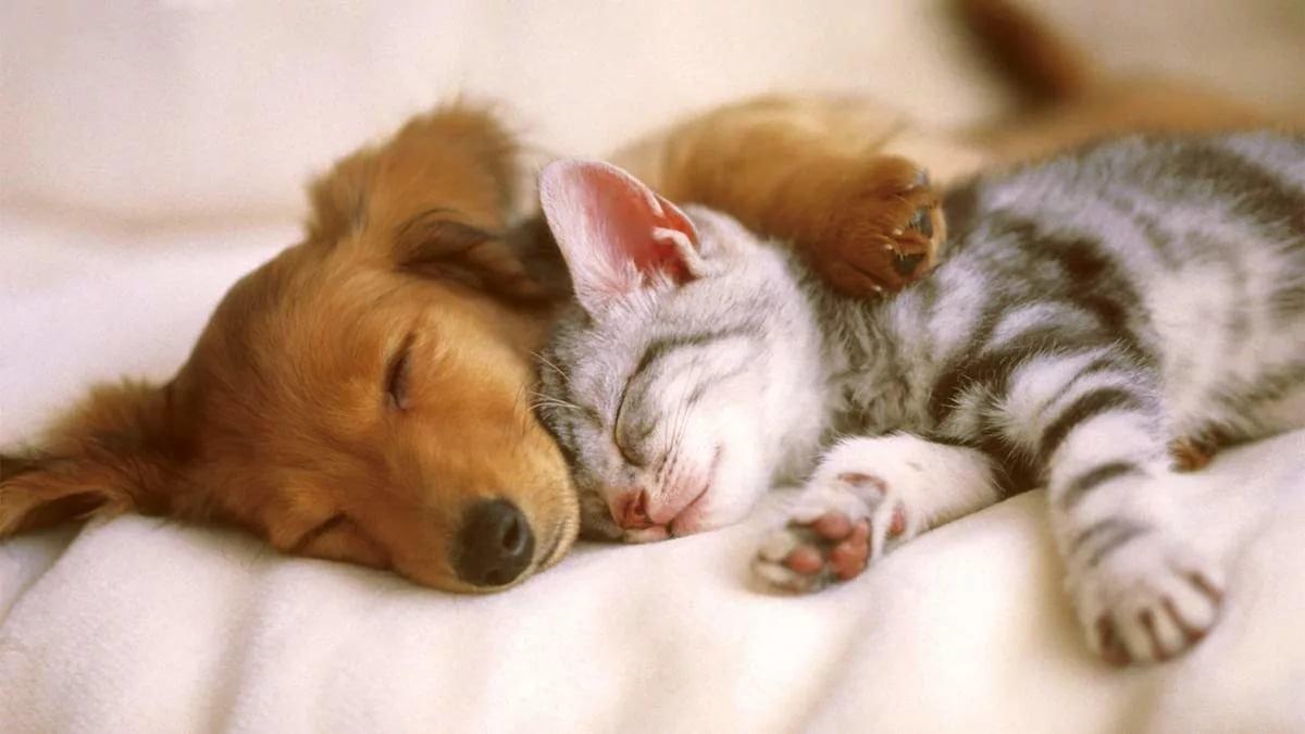 Покрова, картинки доброй ночи с животными