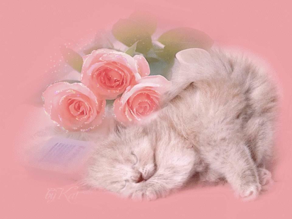 открытки в день рождения дочке с котятами начала вам