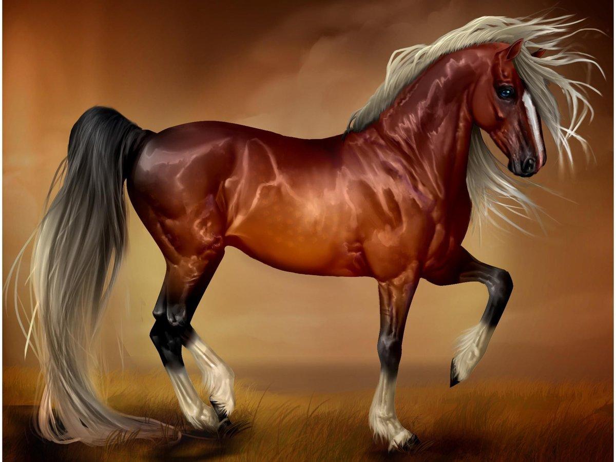 жук кони рисунки фото магазине или
