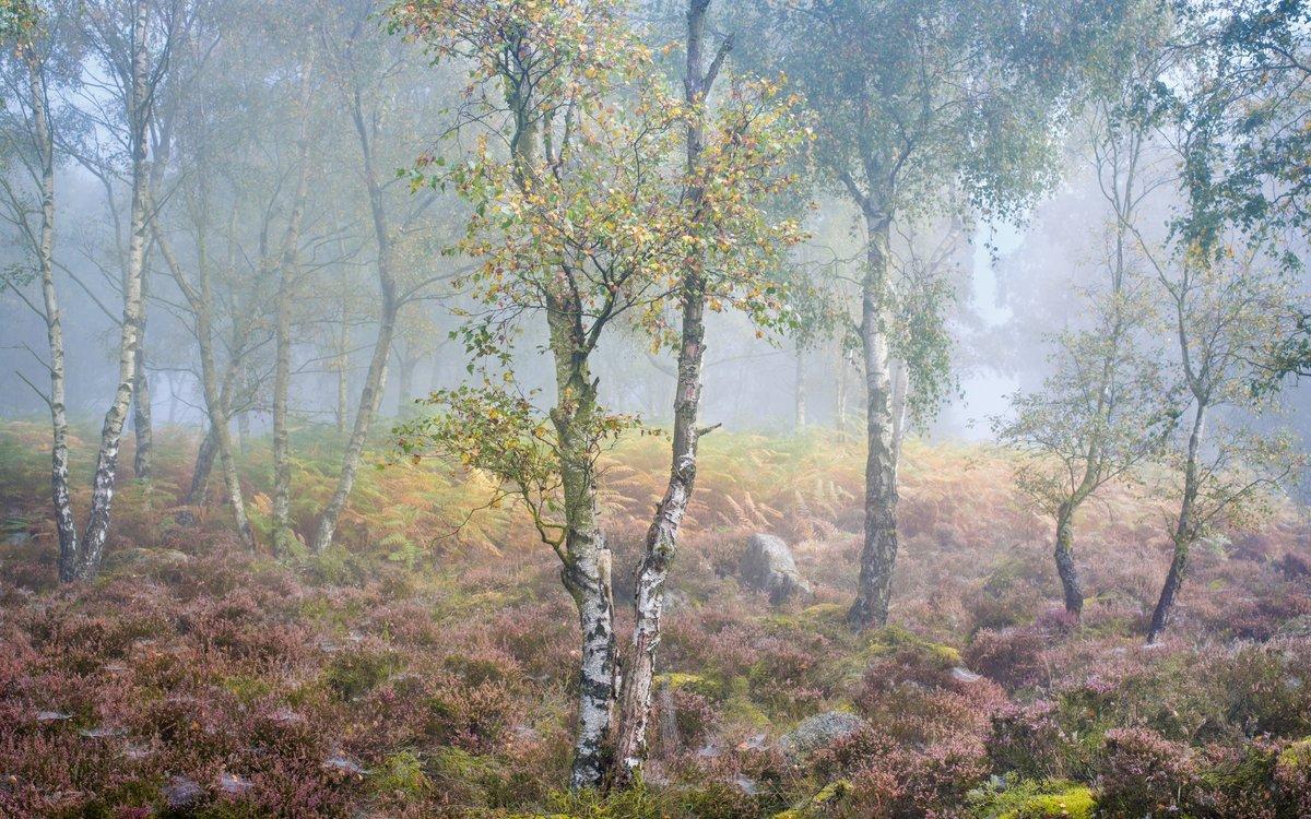 Серая осень, лес, туман, осенняя природа