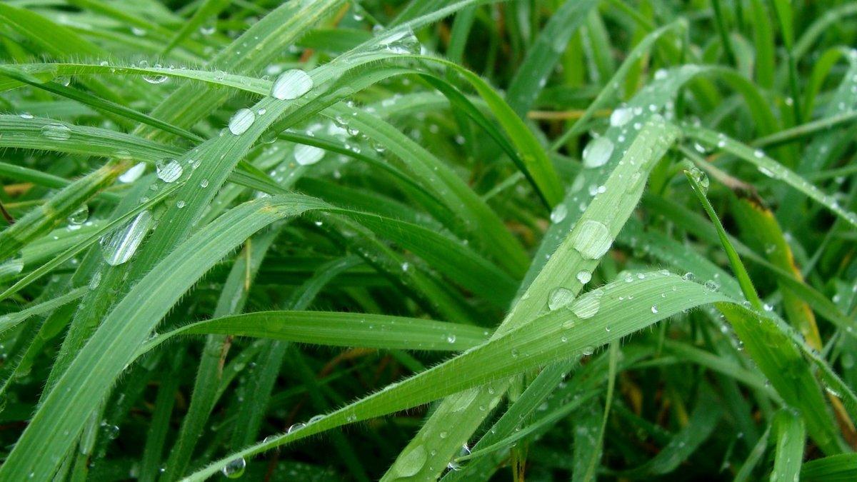 роса на траве фото картинки оснащена
