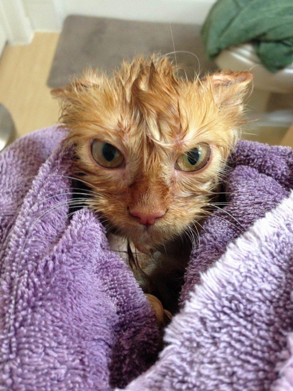 Яндекс картинки прикольные картинки, коты прикольные картинки