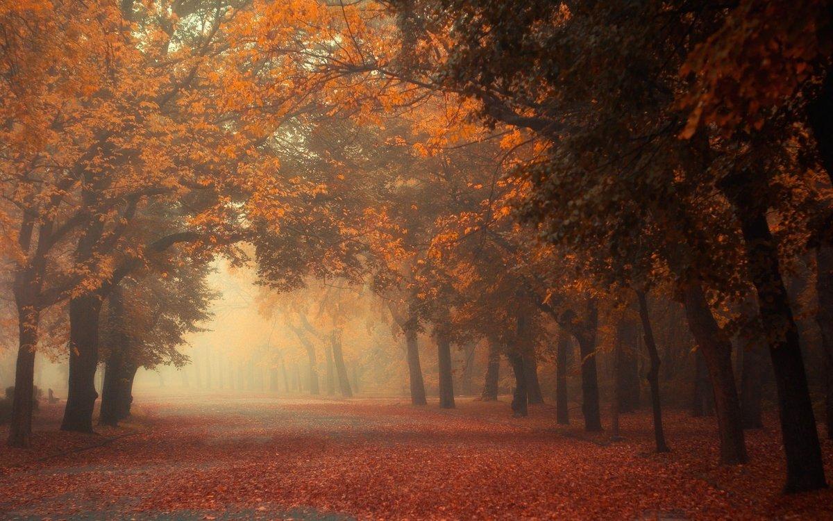 Туман завораживает или пугает, успокаивает или вселяет тревогу. Для каждого ощущения глубоко субъективны. Именно поэтому так разнообразны цитаты про туман, которые можно найти в мировой литературе и кинематографе.