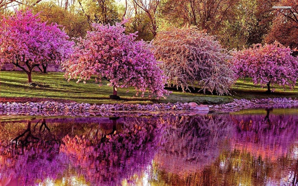 Зятя днюхой, красивые картинки с весны
