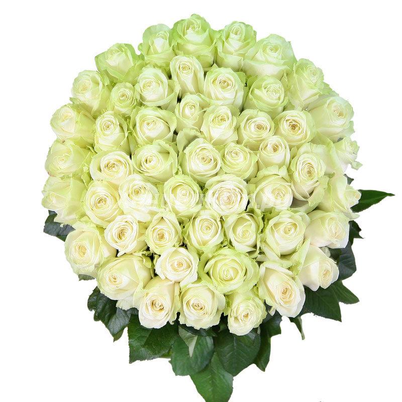 Картинка с красивыми белыми розами, страховщика картинка смешные