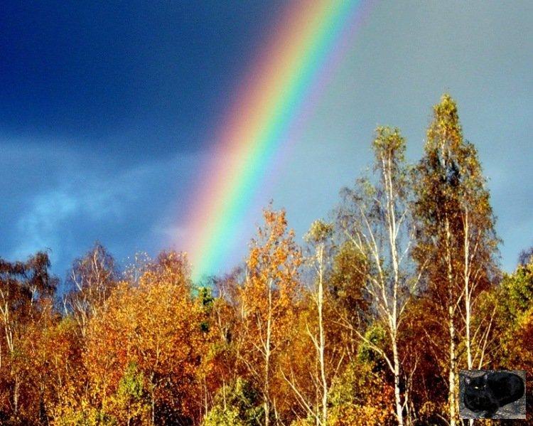 последнему осенняя радуга фото стихи запросу прима