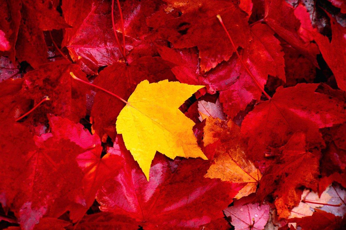 Стране, картинки с осенней листвой