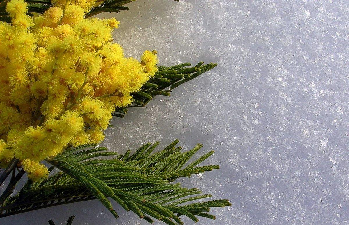 Проф праздники, картинки 8 марта с мимозами