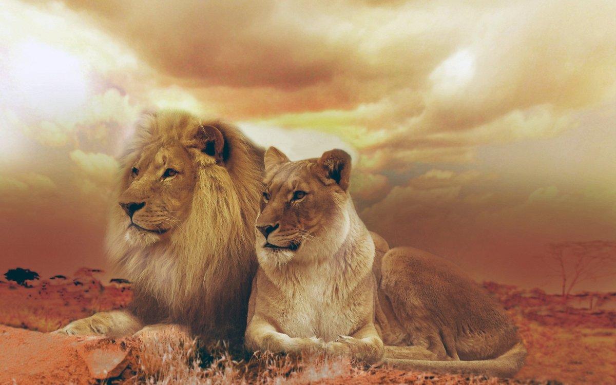 Картинка со львом и львицей, днем рождения
