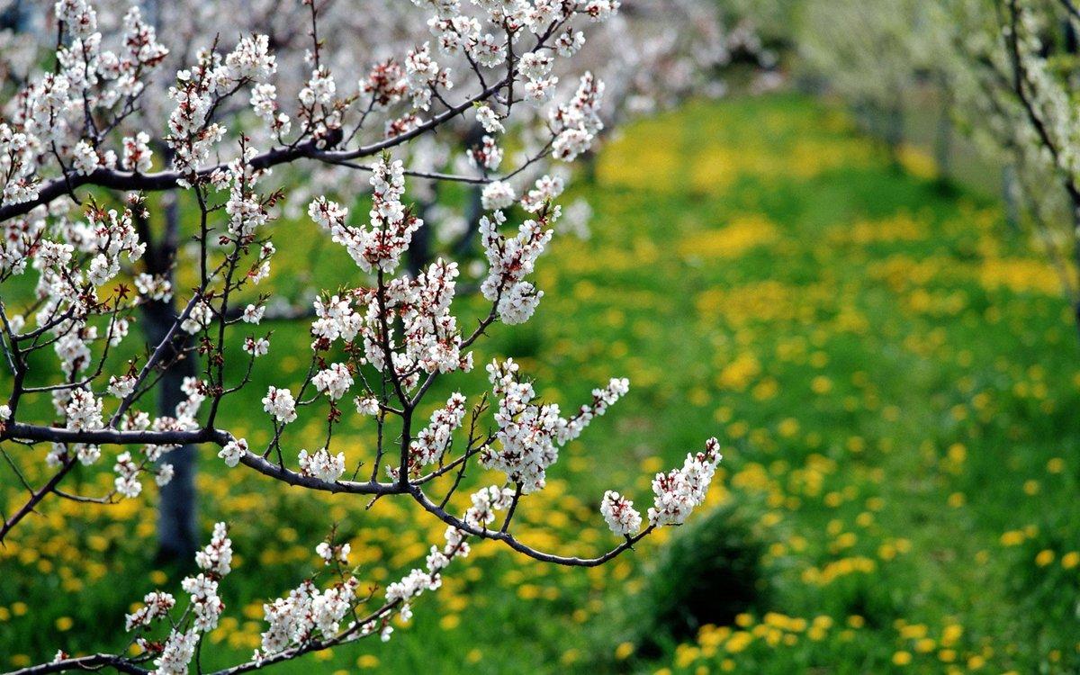 Картинки времена года весна, марта только