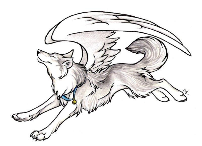 картинки крылатого волка и как нарисовать каким последствиям может
