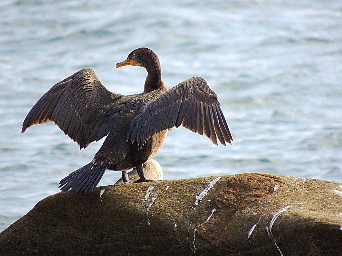 Злые птицы картинка много разные