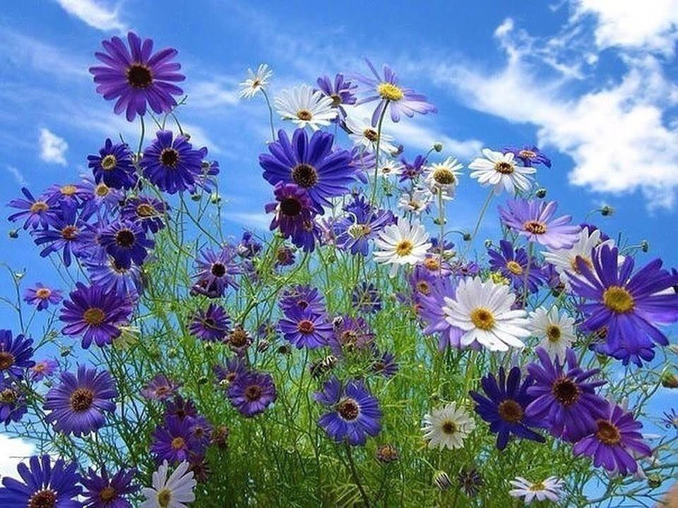 Полевые цветы гифки красивые