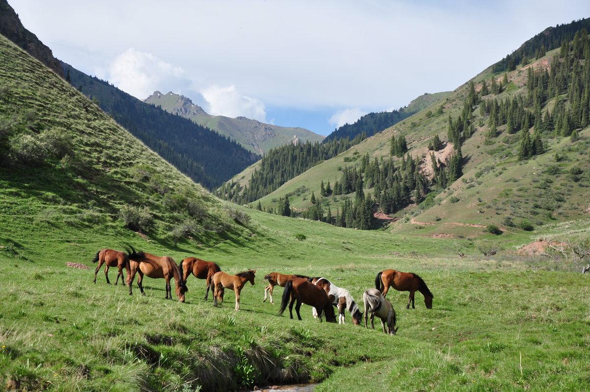 Картинки кыргызстана природы, картинки обложках