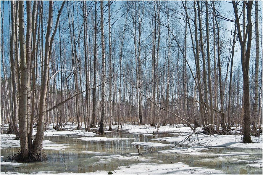 Лес весной картинка для детей