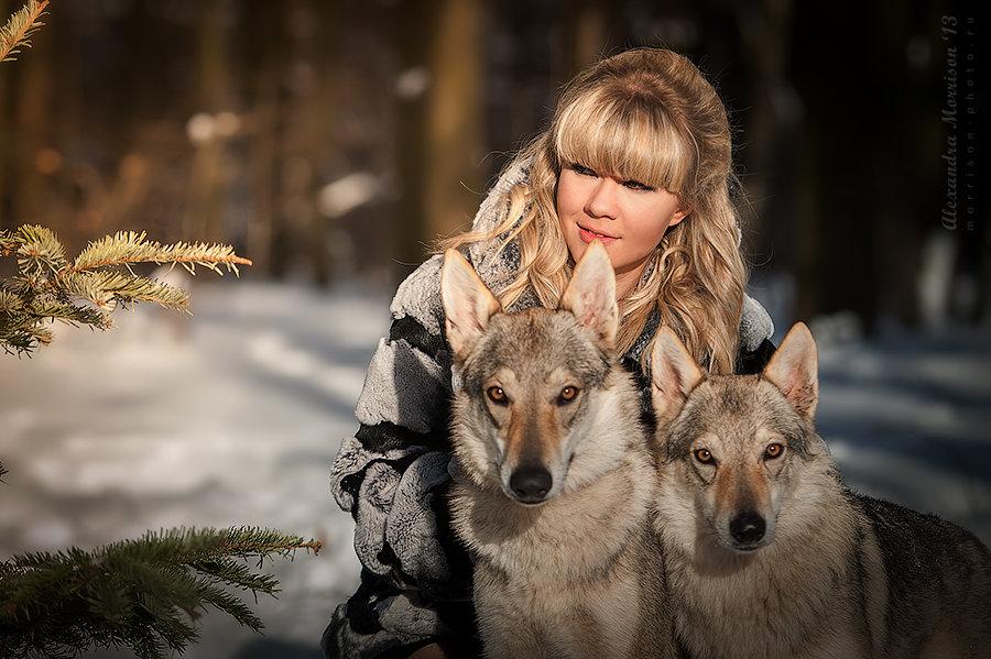 попытался уничтожить фотосессия с волками в москве картина тени исчезают