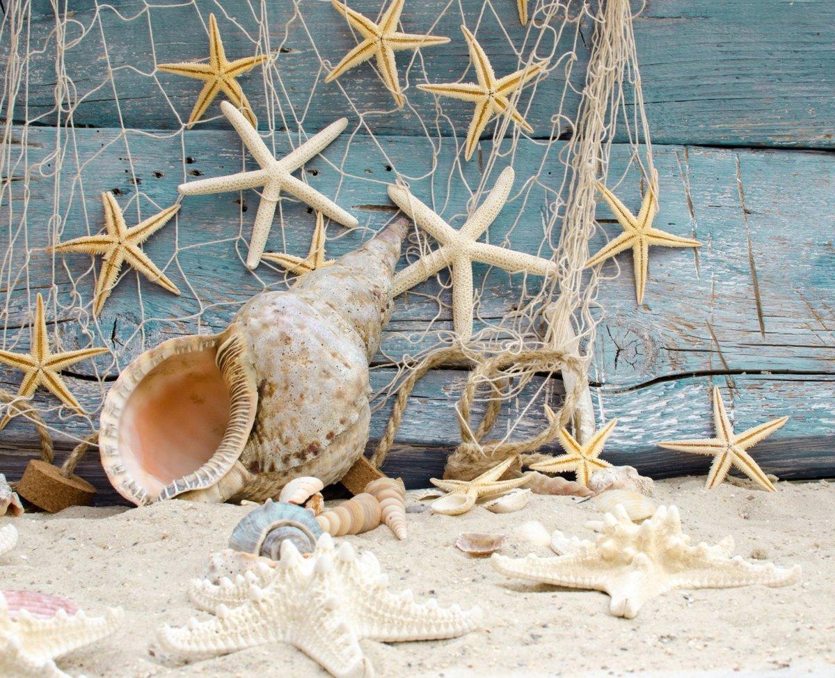 Днем, картинки с ракушками и морскими