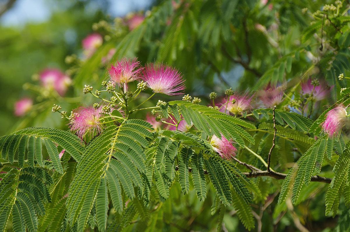 многих продавцов цветы деревьев картинки и названия две трети