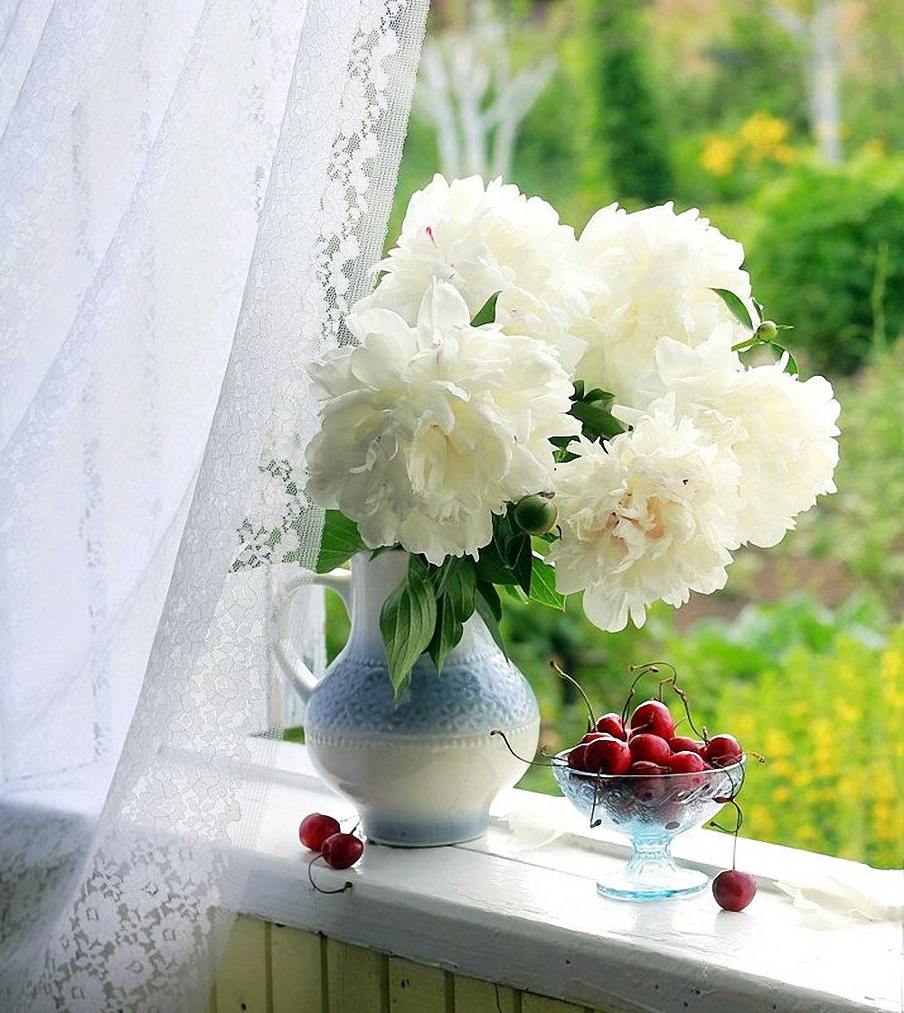 создания доброе утро на окне фото цветка позволяет