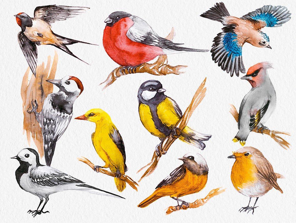 Все виды птиц в картинках