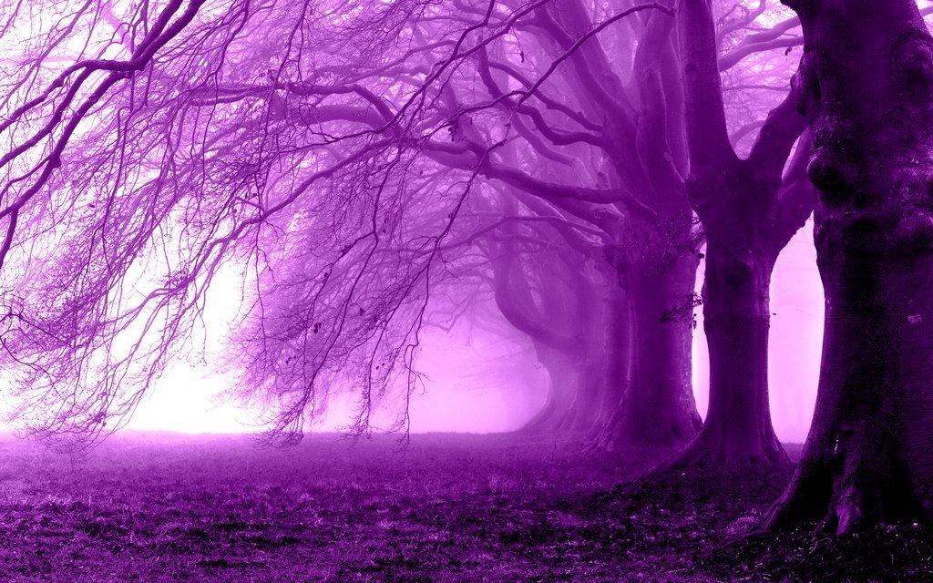 картинки с фиолетовыми рисунками районе