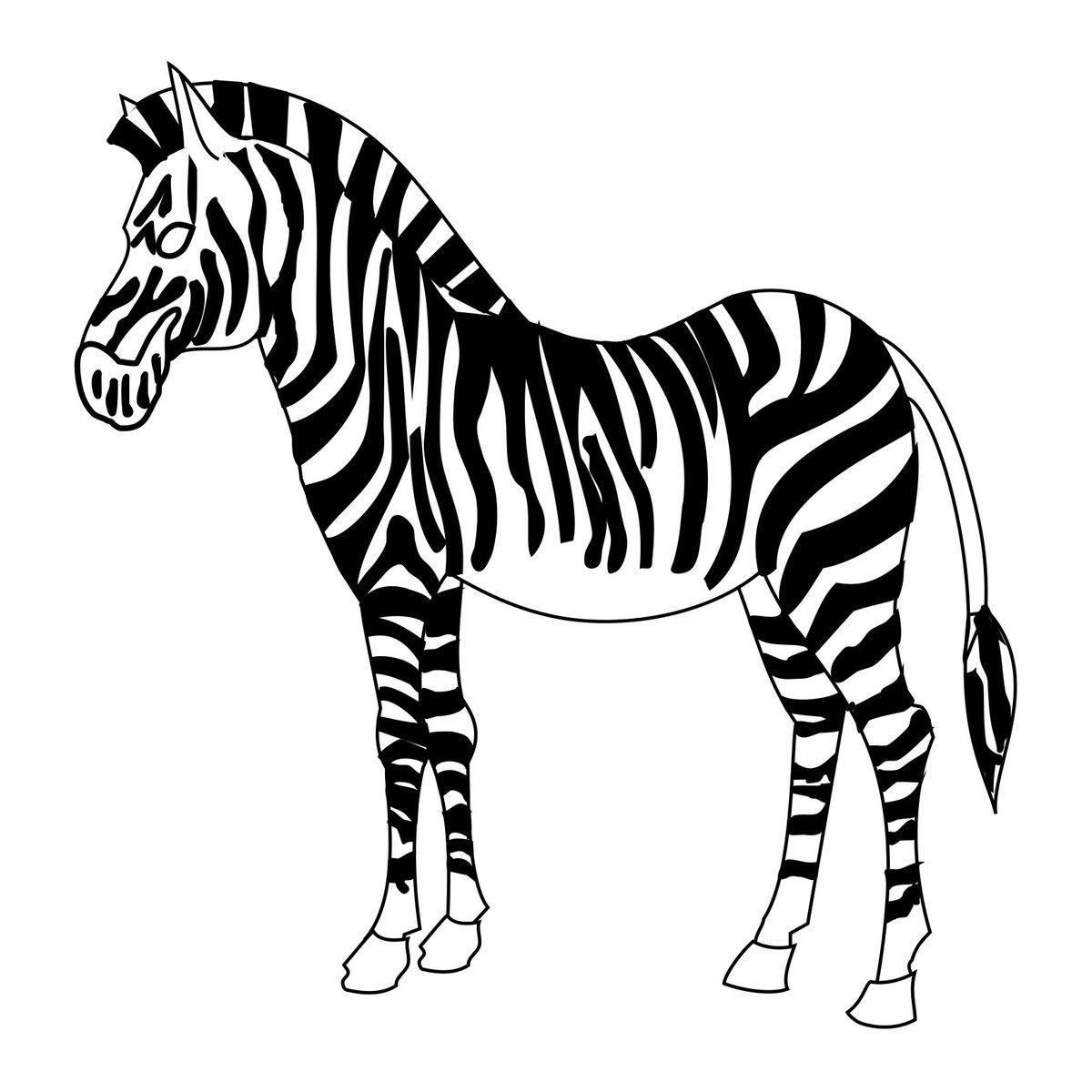 Картинки черно белые зебра