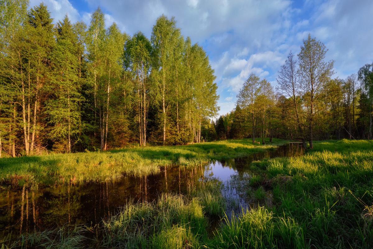 Весна картинки природа в лесу, днем рождения открытка