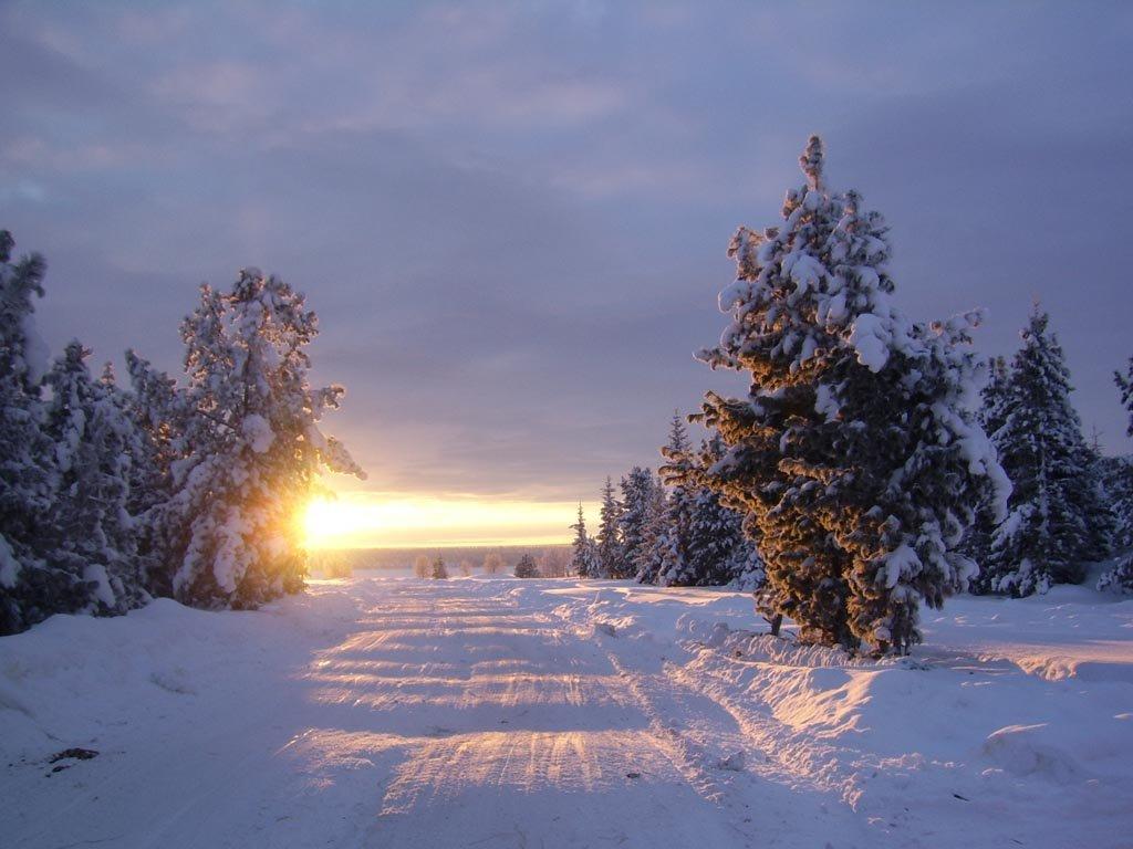 зимний лес стихи красивые книге хэмильтон