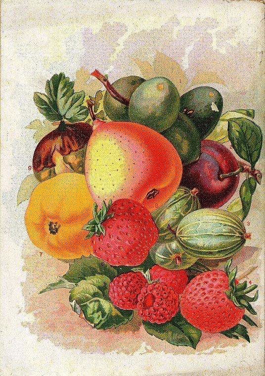Целующихся, открытки с фруктами и овощами