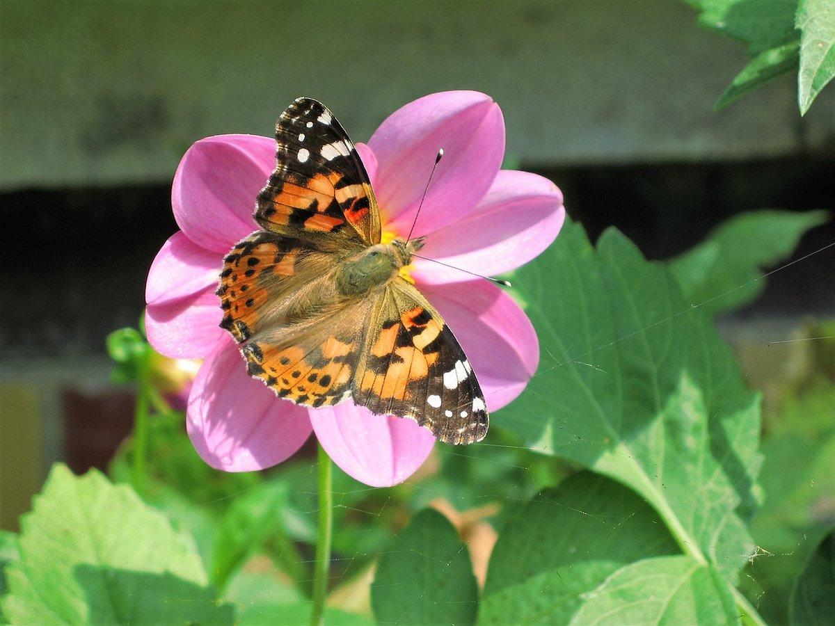 Картинки цветок с бабочкой